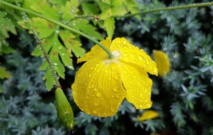 Kurz nach einem Sommerregen von Noemi Eskul