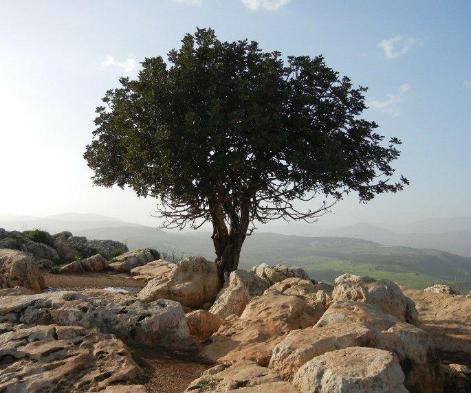 Das Bild zeigt den Blick von einem Hügel mit einem Baum auf die Landschaft Palästinas.