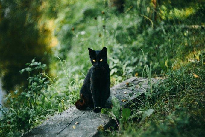 Das Bild zeigt eine schwarze Katze.