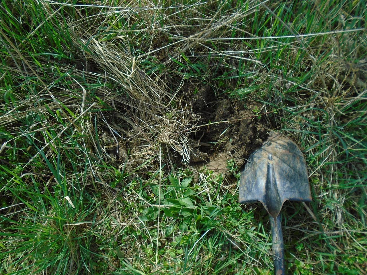 Das Bild zeigt Gras und einen Spaten.